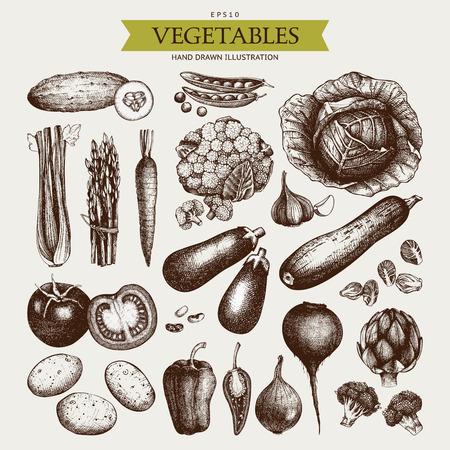 Vector Collection de croquis de légumes dessinés à la main. Ensemble d'illustrations d'aliments sains. Produits frais de la ferme vintage aux couleurs pastel. Vecteurs