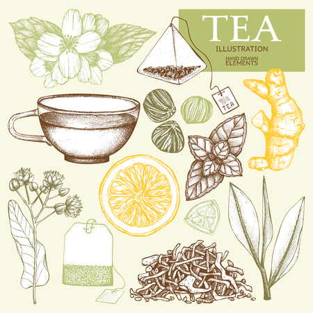Vector collection of hand drawn tea illustration. Decorative inking vintage tea sketch.