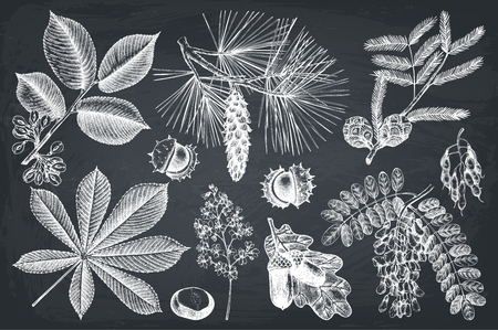 Vector collection of hand drawn trees illustration. Vintage set of leaves, fruits, seeds, nuts, flowers sketch. Botanical garden elements on chalkboard