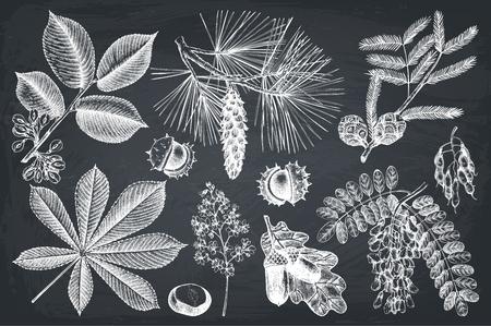 Vektorsammlung Hand gezeichnete Baumillustration. Vintage-Set von Blättern, Früchten, Samen, Nüssen, Blumenskizze. Botanische Gartenelemente auf Tafel