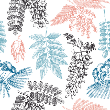 Vector background with hand drawn blossomed Fabaceae plants. Vintage wisteria, Silver wattle, Albizia, Black Locust flowers.