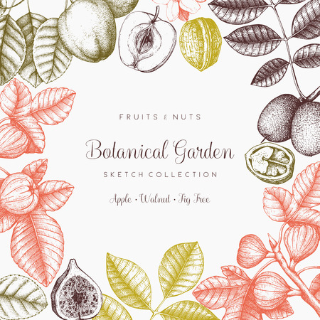 Vector design with hand drawn branch, leaves, fruits sketch. Vintage frame with botanical elements. Retro template on chalkboard. Garden trees illustration Vettoriali