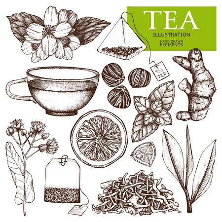 Collection de vecteur d'illustration de thé dessinés à la main. Croquis de thé vintage encrage décoratif. Vecteurs