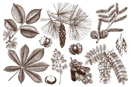 Satz handgezeichnete Bäume Skizze. Frühlingshintergrund mit dekorativer Ulme, Eiche, Akazie, Kiefer, Zypresse, Kastanienillustration. Vektorgrafik