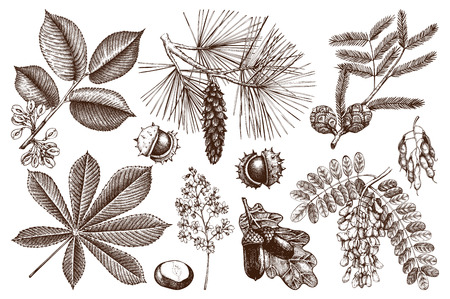 Set of hand drawn trees sketch. Spring background with decorative elm, oak, acacia, pine, cypress, chestnut illustration.