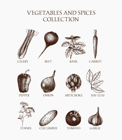 Vintage collection of vintage inking vegetables, herbs and spices sketch. Organic food illustration set Vettoriali