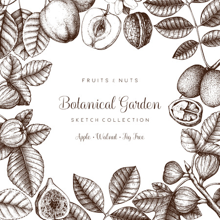 Vector design with hand drawn branch, leaves, fruits sketch. Vintage frame with botanical elements. Retro template on chalkboard. Garden trees illustration Ilustracja