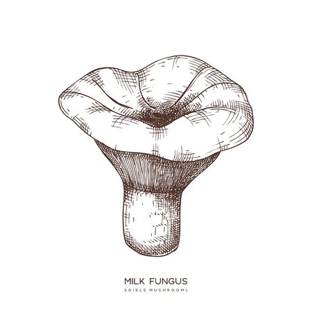 Milk fungus vector illustration. Hand drawn food drawing. Edible mushroom sketch. Organic vegetarian product.