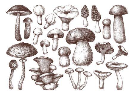 Collection de champignons comestibles de vecteur. Dessins de nourriture dessinés à la main.
