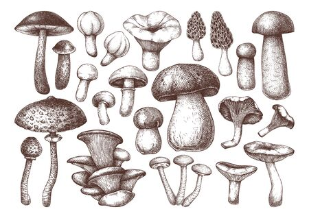 Vector edible mushrooms collection. Hand drawn food drawings.
