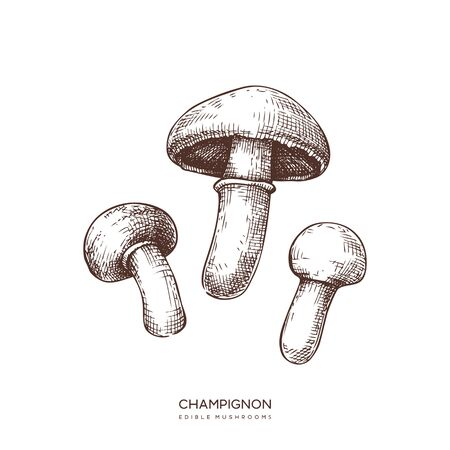 champignon vector illustrations set. Hand drawn food drawings. Edible mushroom sketch. Organic vegetarian product.