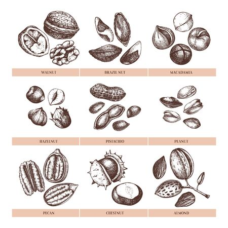 Vector nuts collection. Hand drawn pecan, macadamia, pine nuts, walnut, almond, pistachio, chestnut, peanut, brazil nut, hazelnut. Healthy food illustrations. Engraved style. Vector illustration. Иллюстрация