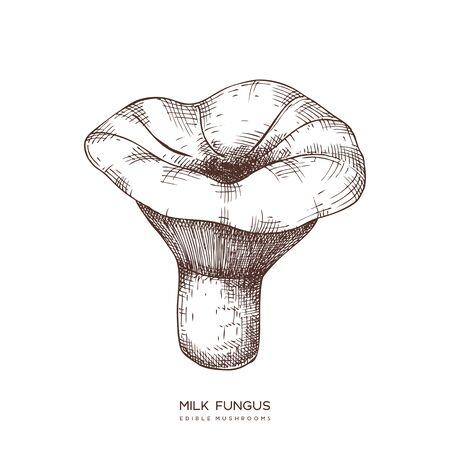 Milk fungus vector illustration. Hand drawn food drawing. Edible Vector illustration. Фото со стока - 128116986