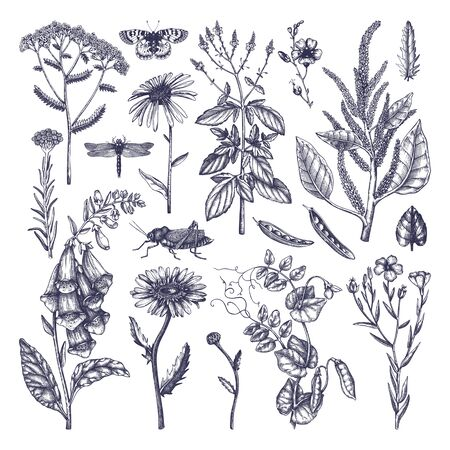 Summer field flowers collection. Vector set of hand drawn herbs, weeds and meadows. Vintage flowers with insects illustration. Botanical elements in engraved style.  Floral black outlines Vector illustration.