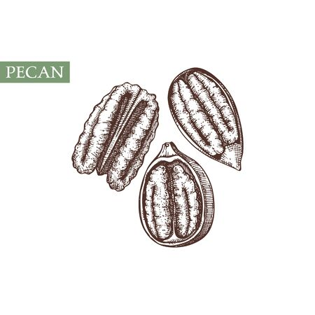 Pecan vector illustrations. Hand drawn healthy food elements. Nuts sketch collection. Organic vegetarian product. Иллюстрация