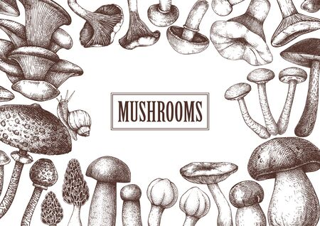 Edible mushrooms vector design. Hand drawn healthy food template. Forest plants sketches. Perfect for recipe, menu, label, icon, packaging. Vintage mushrooms background. Botanical illustration. Vector illustration. Иллюстрация