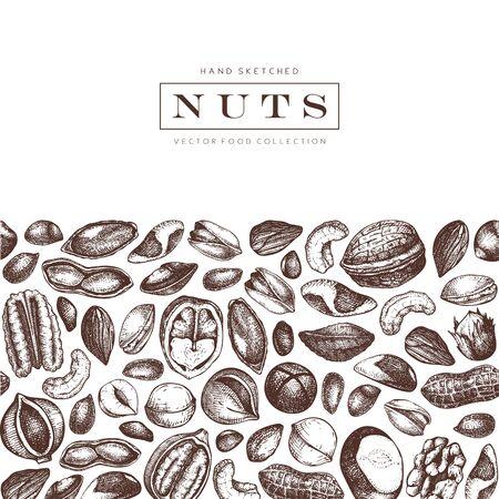 Conception de noix de vecteur. Noix de pécan dessinées à la main, macadamia, pignons de pin, noix, amandes, pistache, châtaigne, arachide, noix du Brésil, noisette, noix de coco et noix de cajou. Fond de nourriture saine. Style gravé. Vecteurs