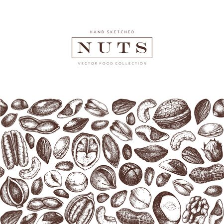 Vector nuts design. Hand drawn pecan, macadamia, pine nuts, walnut, almond, pistachio, chestnut, peanut, brazil nut, hazelnut, coconut and cashew. Healthy food background. Engraved style. Illustration