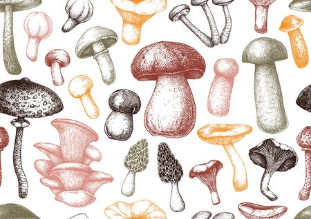 Edible mushrooms vector background.  Forest plants seamless pattern. Perfect for recipe, menu, label, icon, packaging. Vintage mushrooms design. Healthy food elements. Hand drawn illustration.
