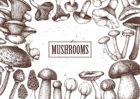 Edible mushrooms vector design. Hand drawn healthy food template. Forest plants sketches. Perfect for recipe, menu, label, icon, packaging. Vintage mushrooms background. Botanical illustration.