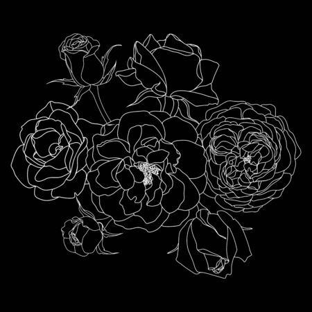 Trendy floral design. White roses on black Иллюстрация