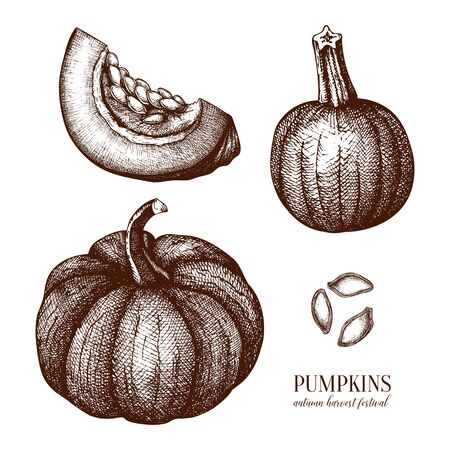 Pumpkin hand drawn illustrations set. Thanksgiving design elements. Harvest festival. Autumn food and drinks drawings. Vector vegetables, pumpkin slice and seeds sketches.