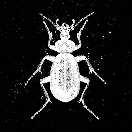 Hand drawn Giant violet beetle  vector illustration. Mystic entomological illustration. Vintage high detailed insects drawing on artistic black background.
