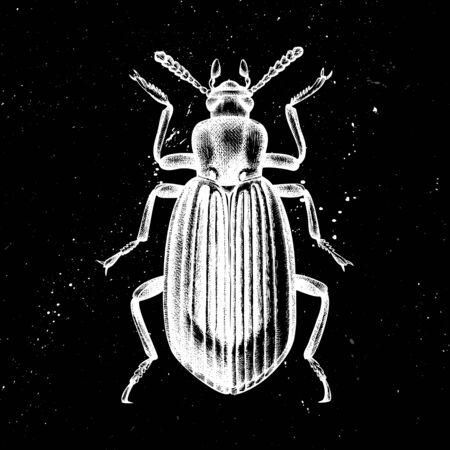Hand drawn Darkling beetle vector illustration. Mystic entomological illustration. Vintage high detailed insects drawing on artistic black background. Çizim