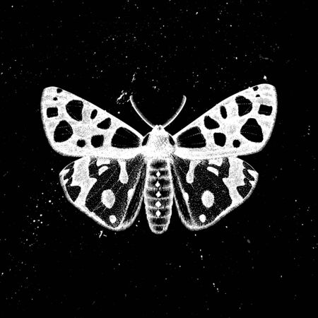 Hand drawn Leopard tiger moth vector illustration. Mystic entomological illustration. Vintage high detailed insects drawing on artistic black background.