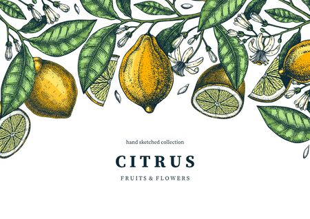 Ink hand drawn citrus fruits frame design. Vector lemons background with fruits, flowers, seeds, leaves sketches. Perfect for banners, greeting cards, invitations, prints. Lemon outlines template