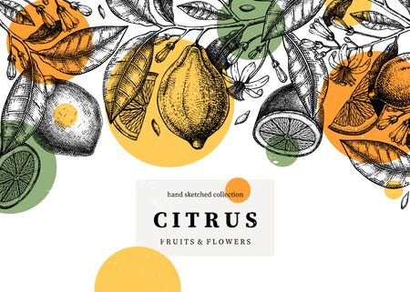 Citrus fruits trendy design. Lemon frame with abstract elements. Exotic plant sketches. Perfect for recipe, menu, label, greeting cards, packaging. Vintage lemons background. Healthy food illustration