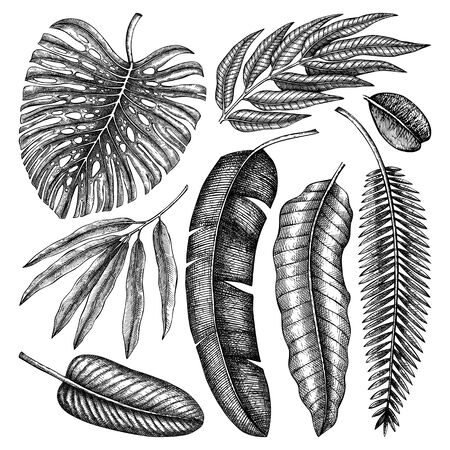 Tropical palm leaves sketches collection. Vector illustrations of exotic plants foliage. Hand drawn botanical elements isolated on white background.