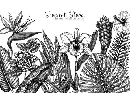 Summer design with tropical plants. Hand drawn exotic flowers, citrus fruits, palm leaves sketches background. Vector template with tropical botanical elements isolated on white background.