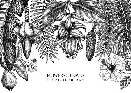 Tropical plants vector frame design. Exotic flowers, citrus fruits, palm leaves sketches collection. Vintage background with tropical flowering plants and leaves. Hand drawn summer template isolated on white background.