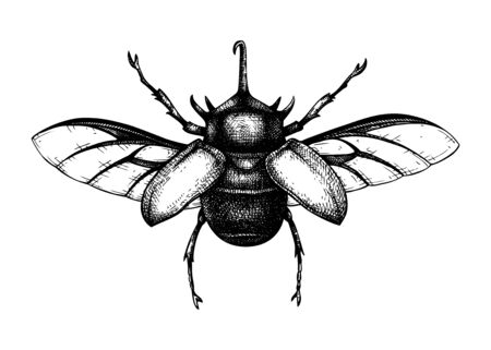 Hand sketched five-horned rhinoceros beetle. Insects collection. Isolated entomological illustration on white background. Insects drawing. Black and white rhinoceros beetle sketch. Realistic outline. Çizim