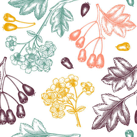 Hand drawn hawthorn with berries and flowers vector backdrop in engraved style. Wild berries seamless pattern. Hand drawing. Vintage garden berry sketch. Hawthorn tree branches background