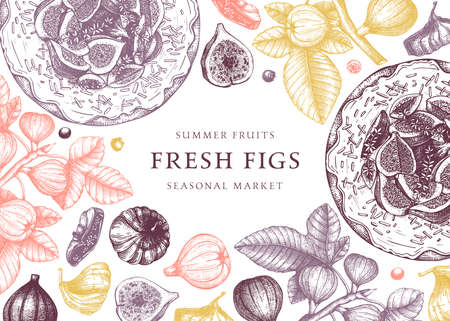 Vector design with hand drawn figs sketches. Vintage frame with botanical illustration of fig branch, fresh and dries fruit, baking cake. Retro template with summer food elements. Top view fruits banner. For menu or recipe book.