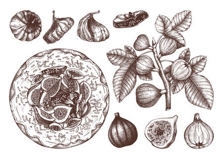 Summer fruits - figs sketches collection. Vintage illustrations of fig branch, dried fruits, homemade cake. Hand drawn summer food elements in engraved style. Perfect for menu, recipes, packaging, logo, brands. Vettoriali