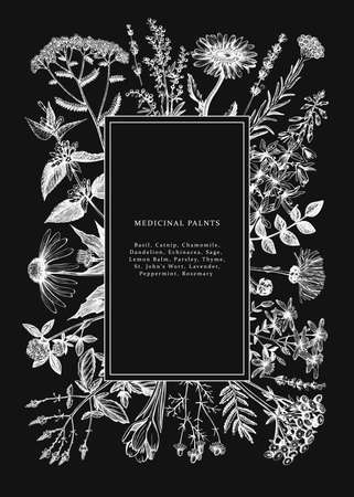 Vintage medicinal herbs card or invitation design on chalkboard. Hand drawn flowers, weeds and meadows illustrations. Summer plants template. Botanical background with floral elements in engraved style. Herbs outlines