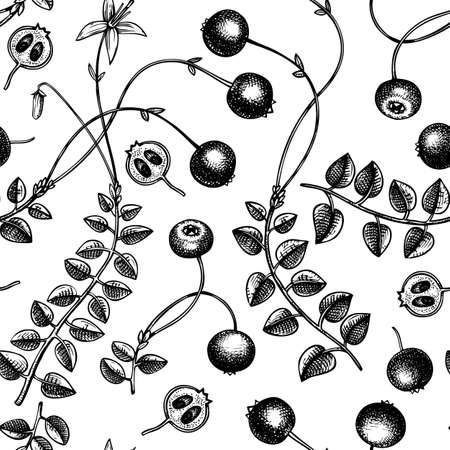 Hand drawn cranberry vector background. Wild berries seamless pattern. Hand drawing. Vintage forest berry sketch. Cranberries plant backdrop. Healthy food ingredient