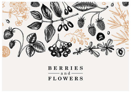 Wild berries and flowers background. Seasonal berry banner design. Ink hand drawing. Vintage forest plants sketch. Summer berries outline. Healthy food ingredient. Vettoriali