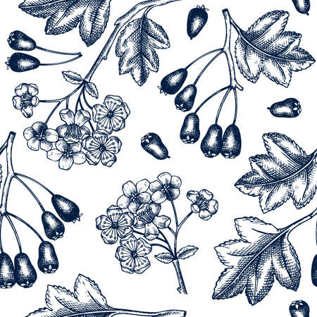 Hand drawn hawthorn with berries and flowers vector backdrop in engraved style. Wild berries seamless pattern. Hand drawing. Vintage garden berry sketch. Hawthorn tree branches background Vecteurs