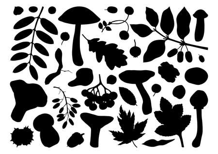 Edible mushrooms vector illustrations collection. Hand drawn food drawings. Forest plants sketches. Perfect for recipe, menu, label, icon, packaging, Vintage mushrooms outlines. Botanical set.