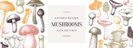 Vintage mushrooms banner. Edible mushrooms vector background. Hand drawn food drawings. Forest plants sketches. Perfect for recipe, menu, label, icon, packaging,  Botanical template