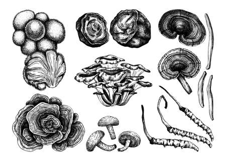 Medicinal mushrooms illustration collection. Adaptogenic plants sketches. Perfect for recipe, menu, label, icon, packaging, Hand sketched mushrooms outlines. Botanical set Stock Illustratie