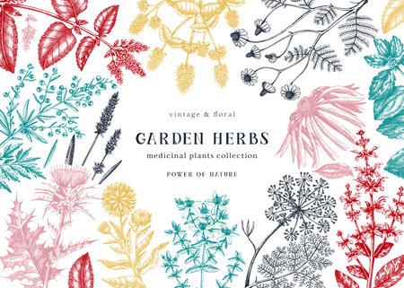 Medicinal herbs background. Hand sketched summer florals, herbs, weeds and meadows design. Vintage plants illustration. Botanical elements in engraved style. Medicinal herbs frame