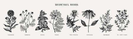 Medicinal herbs collection. Vector set of hand drawn summer herbs, wild flowers, weeds and meadows. Vintage aromatic plants illustrations. Herbal tea ingredients.Botanical elements in engraved style. 向量圖像