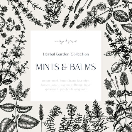 Mints and balms vintage design. Hand sketched aromatic and medicinal herbs frame. Mint plants frame in vintage style. Perfect for herbal tea ingredients, recipe, label, packaging. Stock Illustratie