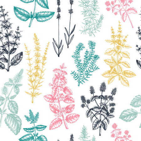 Mints and balms seamless pattern. And sketched aromatic and medicinal herb background. Herbal tea ingredients. Mint plants in vintage style. Summer wild flower backdrop.