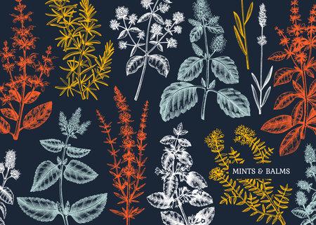 Mint plants design. Hand sketched mints background. Vintage herbs, leaves, flowers hand drawings design. Perfect for recipe, menu, label, packaging. Herbal tea template. Botanical illustration.